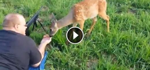 baby deer licks gun barell