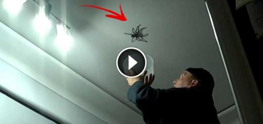 big spider attacks daddy