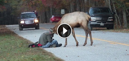 elk and photographer