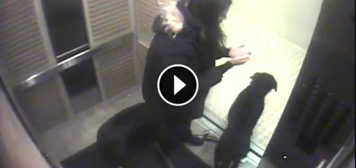 girl saves dog elevator