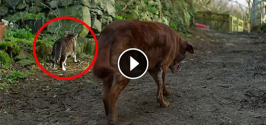 What This Stray Cat Do for a Dog is Unbelievable