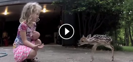 cute girl deer playing