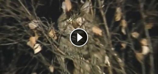 saving cat russia