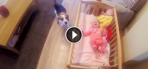 When Baby Was Crying, Mom Was Shocked What The Dog Does