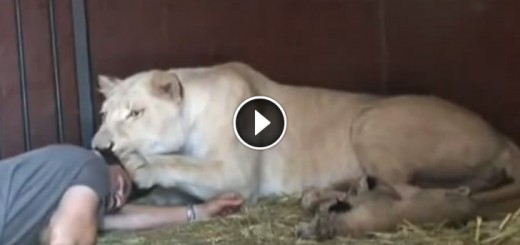 He Approaches A Lioness With Newborn Cubs