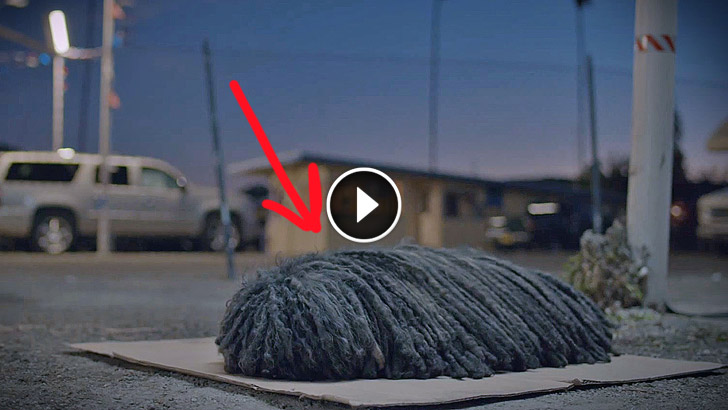 It Looks Like An Old Mop On The Street But When The Sun