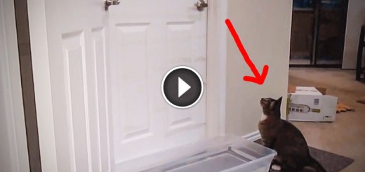 This Cat Shocks his Owner With an Unusual Talent