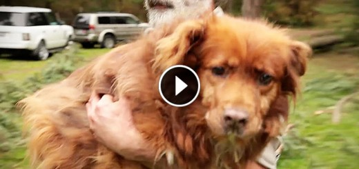 Dog Rescuer Gets Huge Surprise