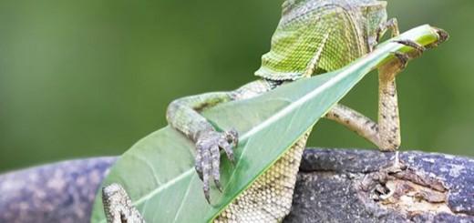 dragon lizard playing leaf guitar