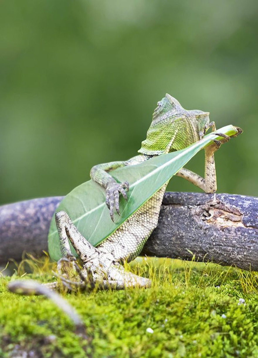 dragon lizard playing leaf guitar