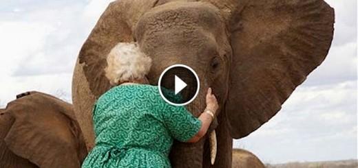 sheldrick hug elephant orphanage