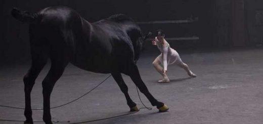 balerine horse