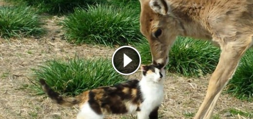 Cat & Whitetail Deer Bath