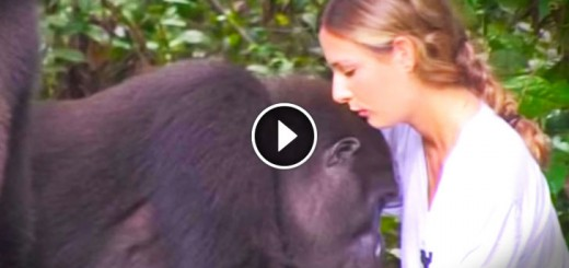 This Family Saved This Gorillas And Set Them Free