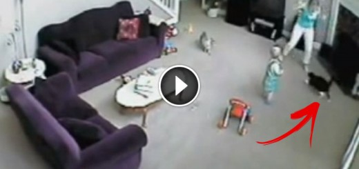 Cat Protects Toddler from Babysitter