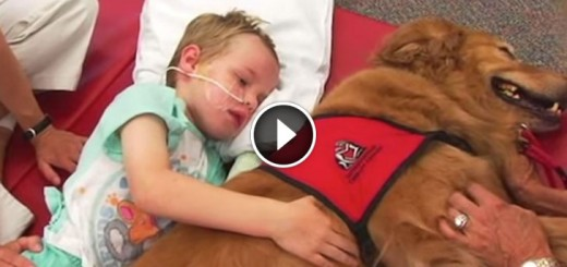 Dog Has Incredibly Profound Effect On Boy With Traumatic Brain Injury