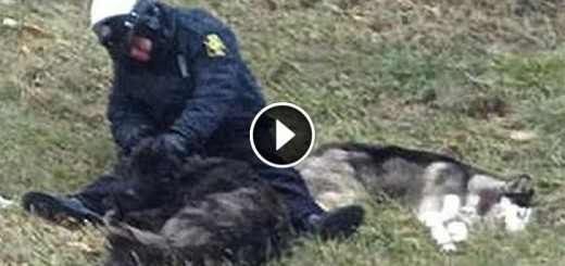 Police officer sits in the cold with lost dogs until help arrives