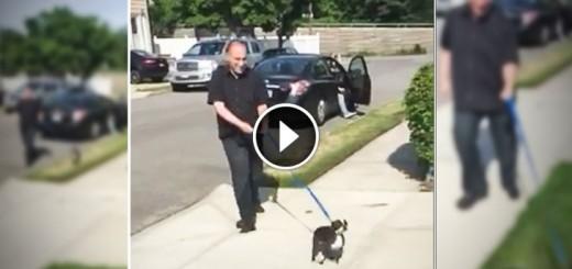 dog lost walk resque