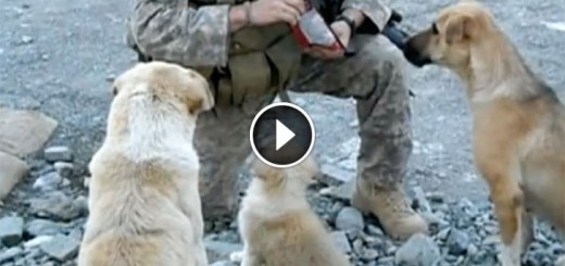 soldier stray dogs reunited