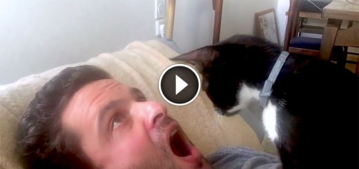 Man's Cat Is The World's Worst Dentist