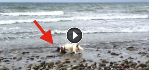 Hero Dog Helps Save Beached Baby Dolphin