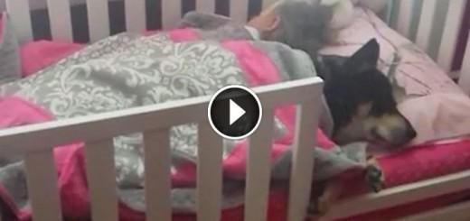 resqued dog napping buddies