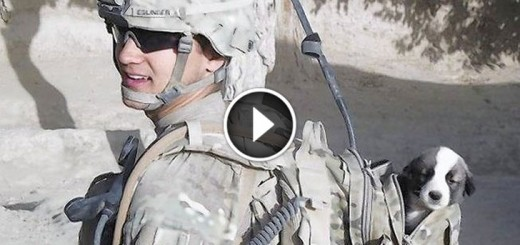 soldier reunites with puppy afghanistan