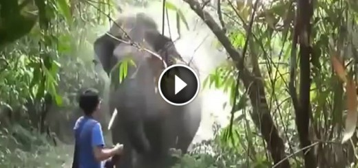 elephant scary attack stand still