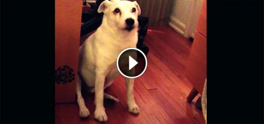 guilty dog busted