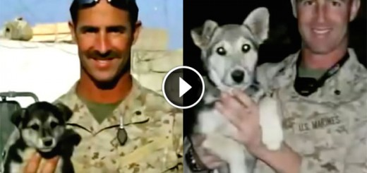 marine refuses to leave pup behind