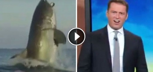 massive shark surprise australian reporter