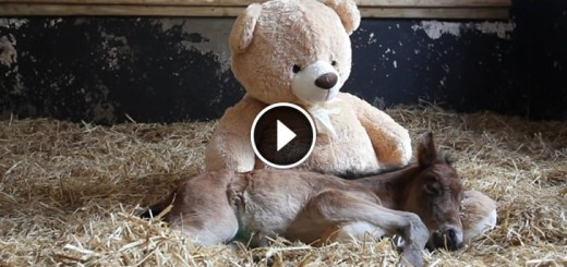 orphaned pony teddy bear