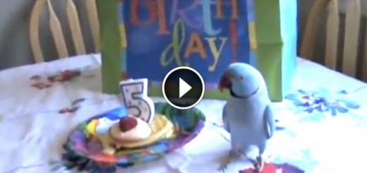 parrot birthday reaction
