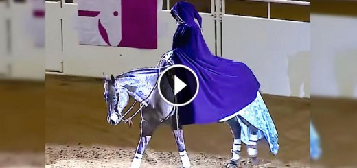 freestyle champion frozen horse