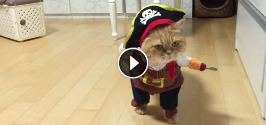 pirate cat halloween costume