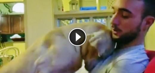 guilty dog dad forgive