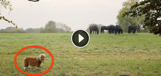 tiny horse ignored