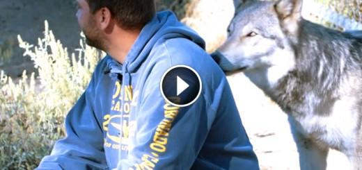 veteran wolf ptsd