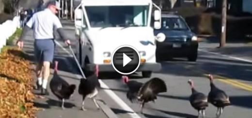 turkey attacks mailman