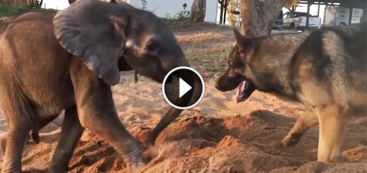 sick baby elephant meet dog