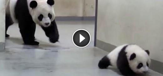 baby panda sneak