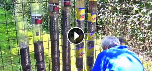 coca cola bottles garden