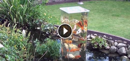 fish tank pond