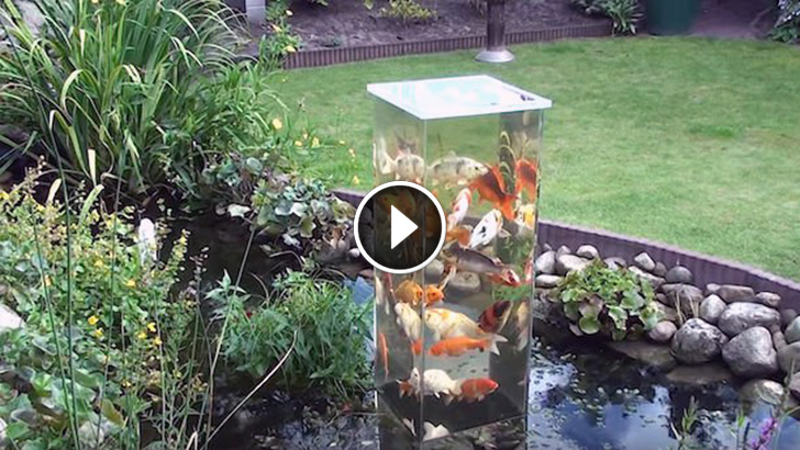This Dude Turns A Fish Tank Upside Down In His Pond Now