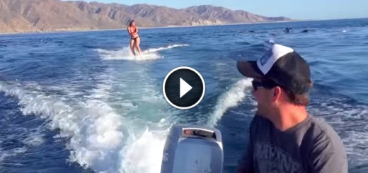 girl dolphins wakeboard