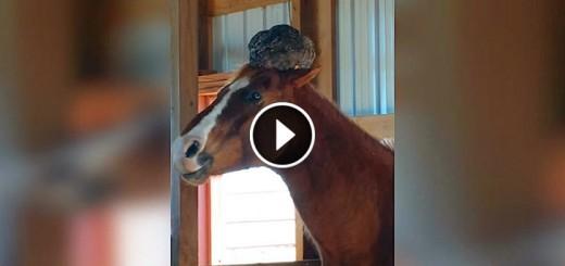 horse chicken head