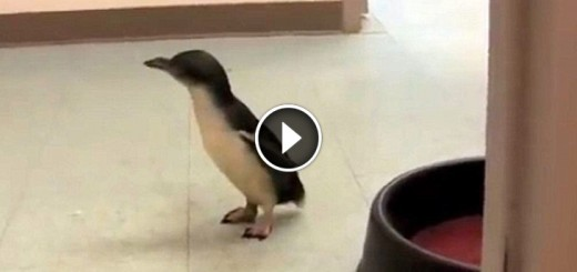 penguin friend tickles