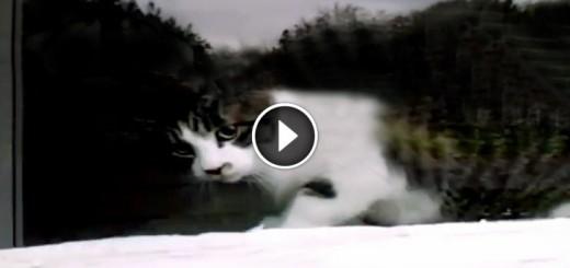 mailman cat