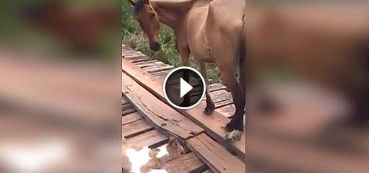 baby horse bridge