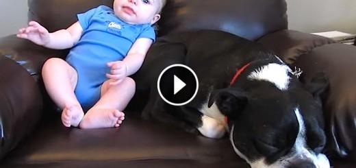 baby poop dog